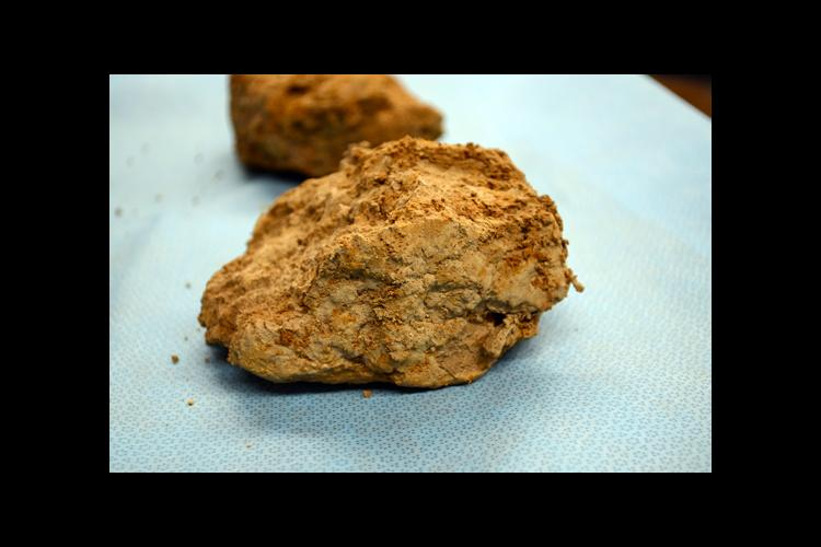 Fragipan, a cement-like layer found in some Kentucky soils, is limiting the yield potential of the state's row crops.