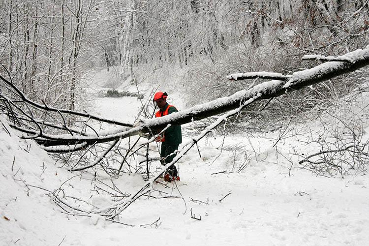 Man sawing downed tree in winter