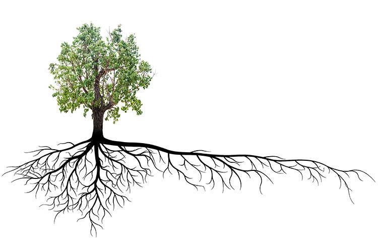 Tree and root system graphic