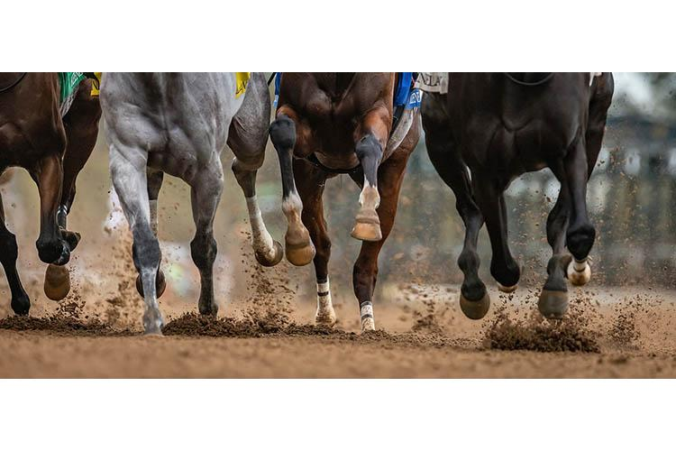 Thoroughbred legs during racing event