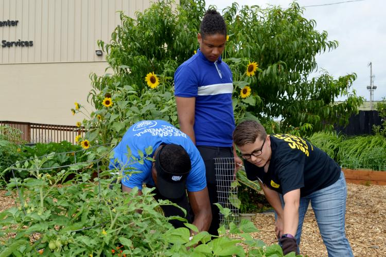 Corbin Hannah, right, harvests vegetables with Danny Rochon, left, and Joe Robinson.