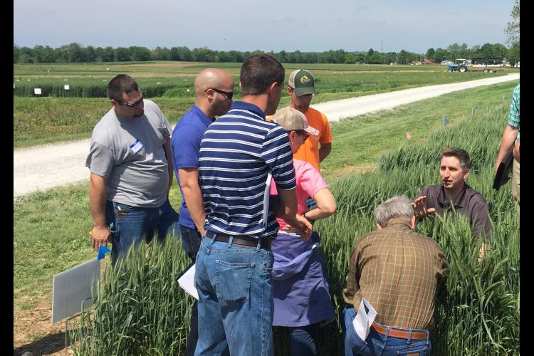 Chad Lee, kneeling center, director of the UK Grain and Forage Center of Excellence, talks to participants about wheat condition during a previous KATS training.
