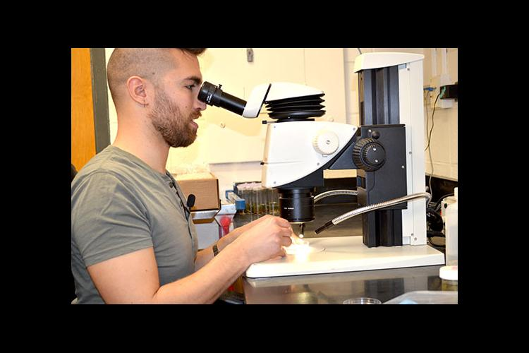 Jamin Dreyer looking into microscope at sample of a bug.