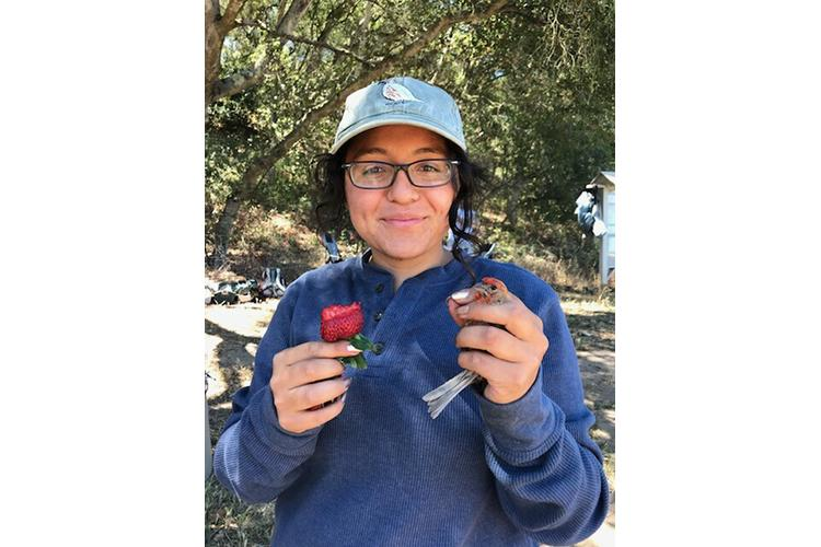 Karina Garcia, UK doctoral student, holds a house finch and a strawberry in a previous study in Prunedale, California. Photo by Elissa Olimpi, post doctoral scholar at University of California, Davis.