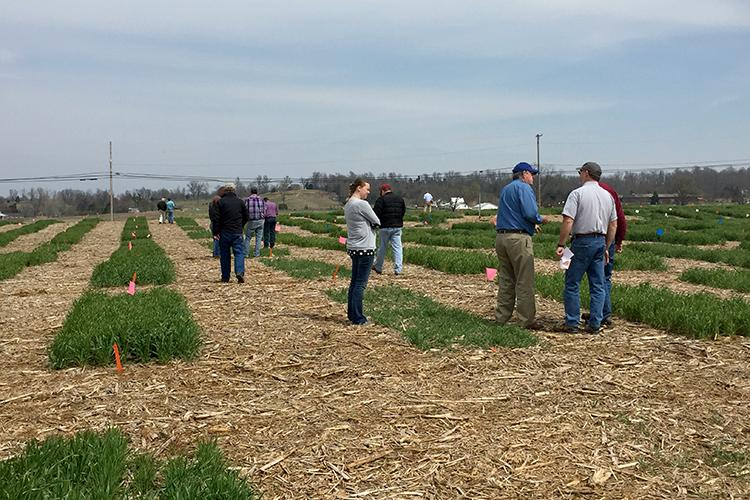 The KATS Green-up Workshop will offer producers information that will help them make informed decisions during wheat green-up and as they prepare to plant corn and soybeans. Photo courtesy of KATS.