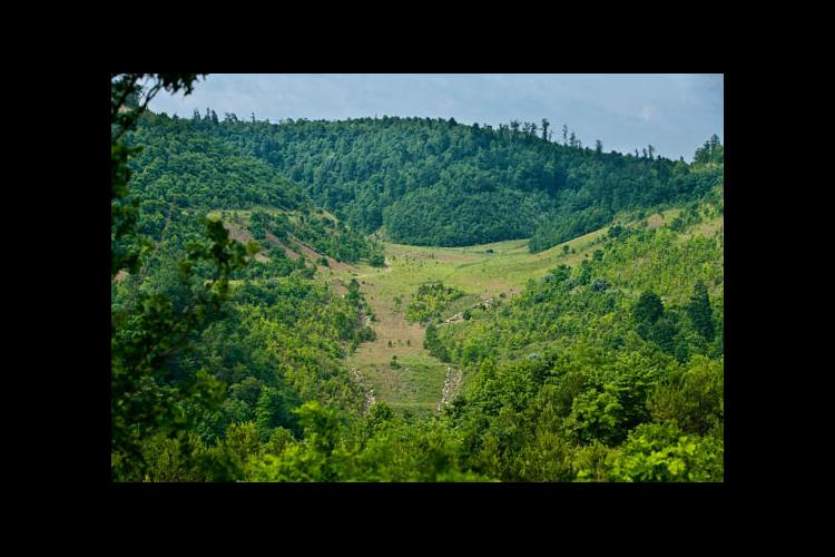 Kentucky has the ability, because its forests are diverse, to produce a wide range of quality hardwood species