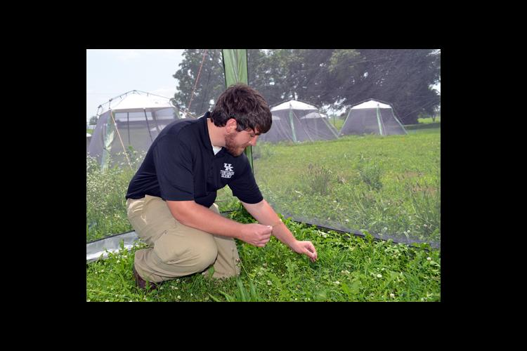 UK doctoral student Jonathan Larson collects clover heads to determine if they've been affected by past insecticide use.