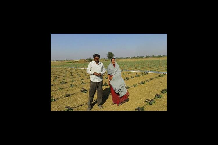 A farm family standing in their drip-irrigated field in Gujarat state, India (2014). They use a solar pump & gravity.
