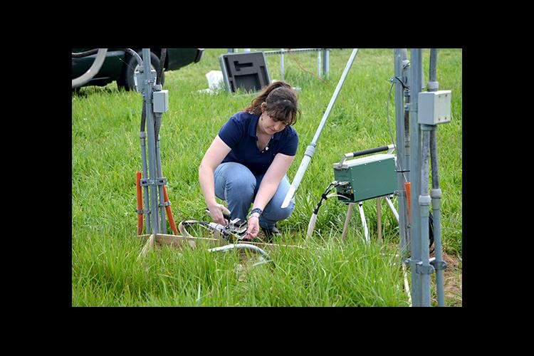 Former UK graduate student Marie Bourguignon measures the amount of photosynthesis occuring on tall fescue.