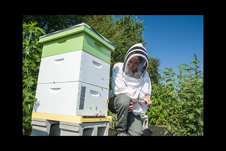 UK entomologist Clare Rittschof is leading a research project to study how spring food availability on farmlands impacts bees.