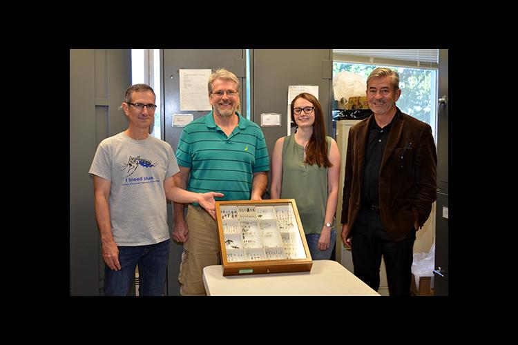 Paul Baker, Eric Chapman, Emily Nadeau and Mike Sharkey display some wasps in Sharkey's lab..