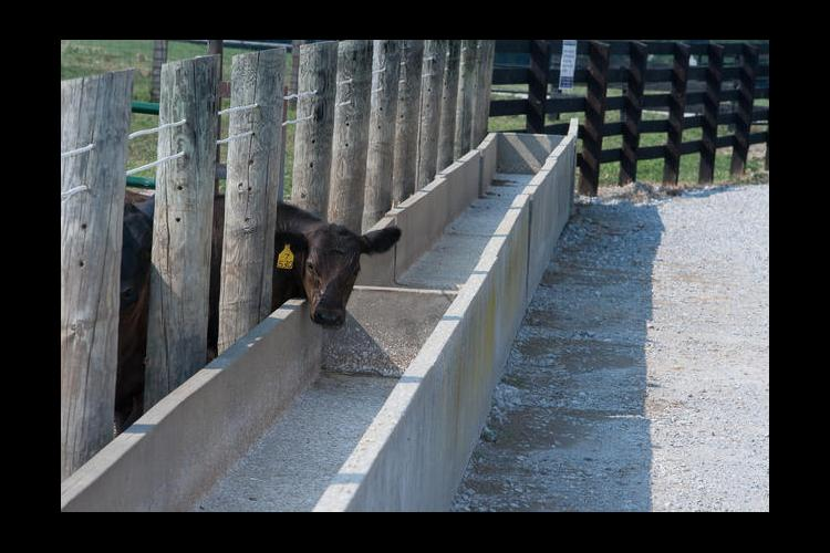 Kentucky cattle numbers have decreased by about 195,000 since 2007