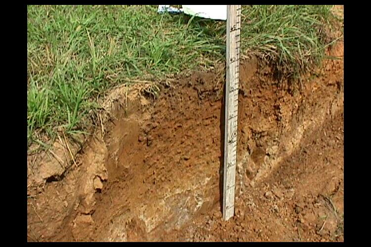Soil fragipans like the one pictured here reduce crop yields. UK soil scientists have found that annual ryegrass can break down the fragipan. Photo courtesy of Lloyd Murdock, UK soil scientist.