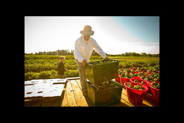 UKAg Horticulture Research Farm is part of Follow the Food tour.