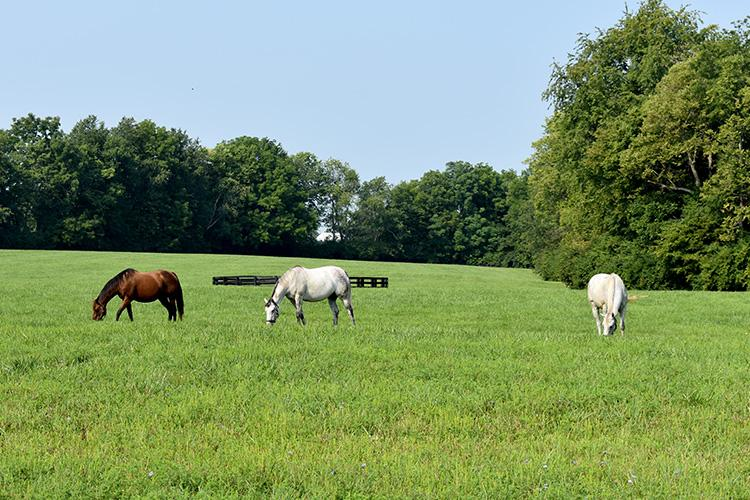 Horses graze at Spendthrift Farm. Photo by Katie Pratt, UK agricultural communications.