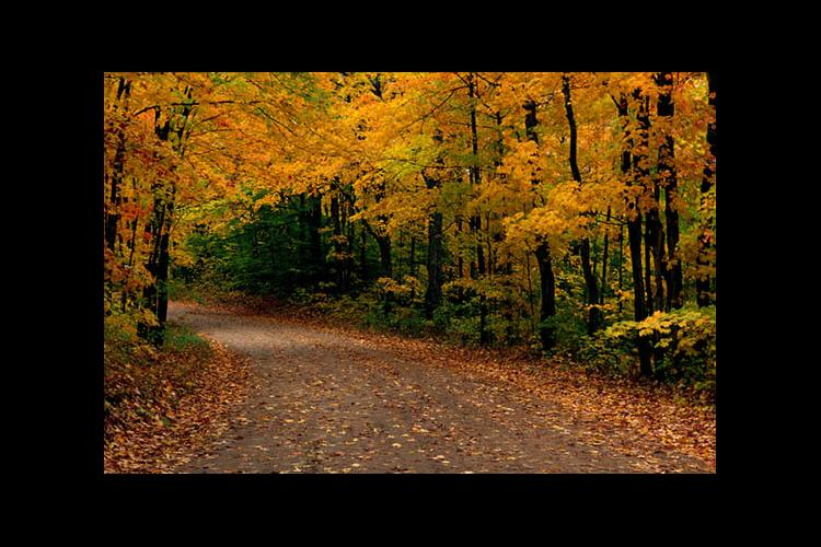 Woodland road in the fall