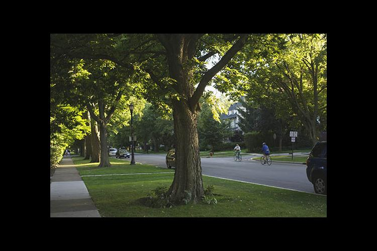 Urban forests benefit city dwellers.
