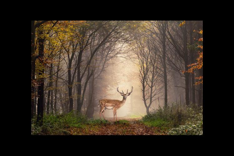 A deer in a forest