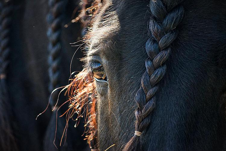 Photo of a horse. UK conducted the last survey 10 years ago. Photo by Hannah Waroway