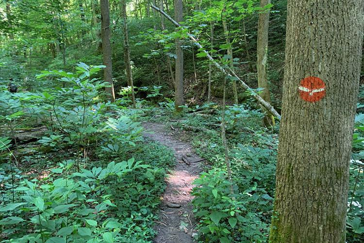 A trail in the Tom Dorman State Nature Preserve