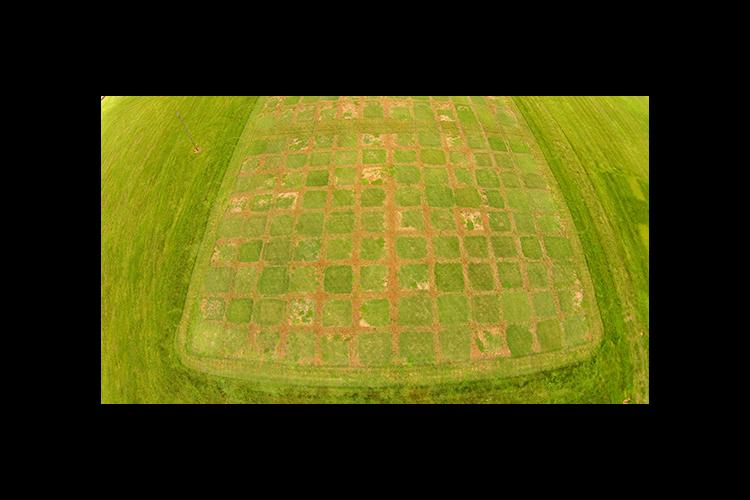 An aerial shot of the turf research plots at UK's A.J. Powell Jr. Turfgrass Research Center at Spindletop Research Farm.