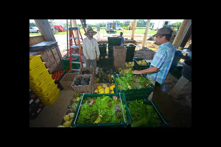 Fresh produce being prepared for distribution through the UK CSA Project