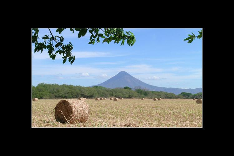 Hay rolls stand in a Nicaraguan field with Volcano Momotombo in the background.