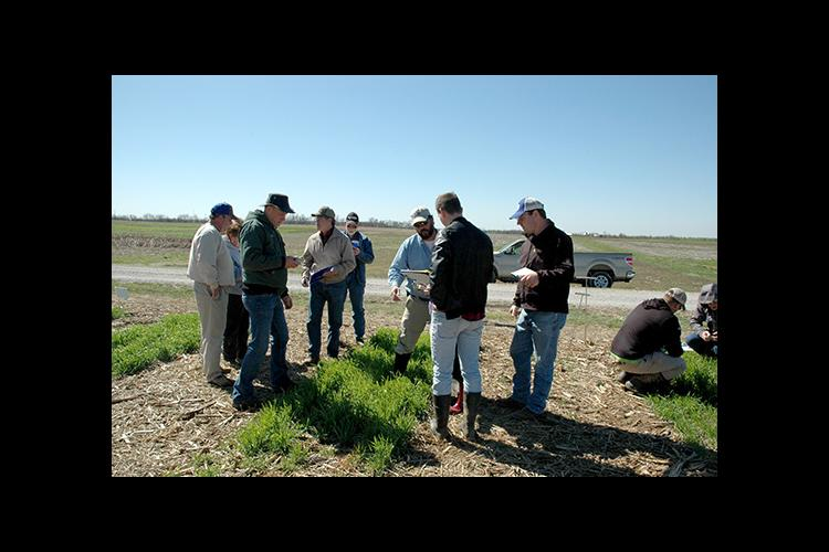 Edwin Ritchey, center, talks with producers during a 2017 Wheat Field School.