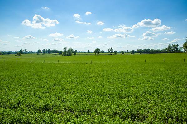 Field of alfalfa in Scott County. Photo by Matt Barton, UK agricultural communications.