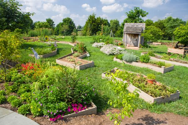 Raised beds gardens like these at The Arboretum's Kentucky Children Garden are ideal for beginning gardeners.  Photo by Matt Barton, UK agricultural communications.