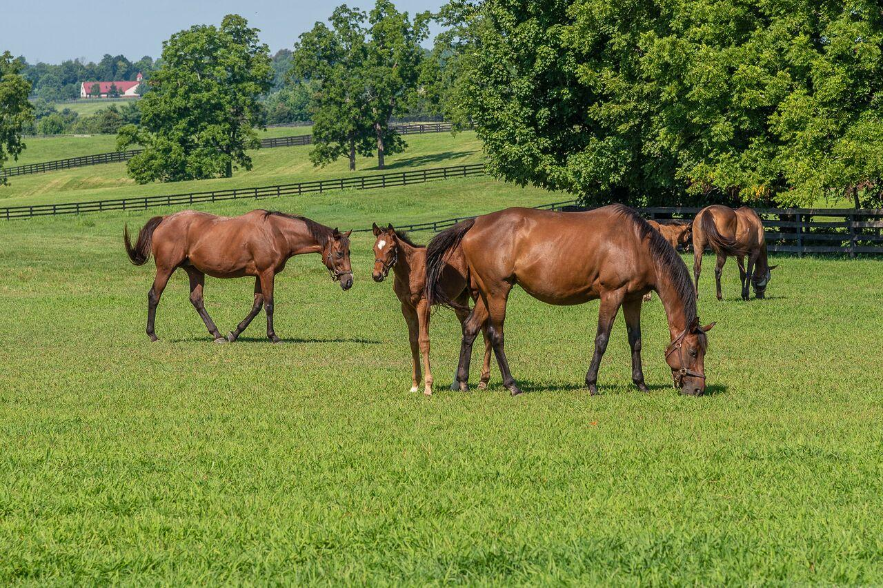 Horses graze on pasture at Mill Ridge farm. Photo by Jimmy Henning, UK extension forage specialist.