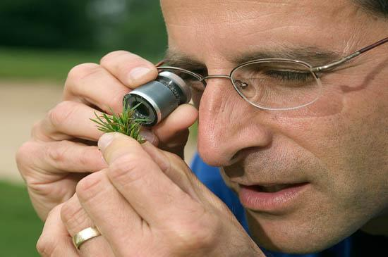 Professor Paul Vincelli examines turfgrass for disease.