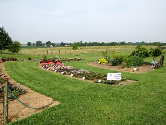 2015 bedding plant trial at the UK Research and Education Center