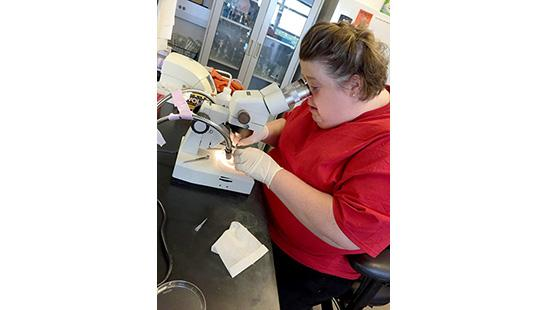 Lincoln County teacher Dana Moore dissects a mouse aorta in the UK lab of Nancy Webb.