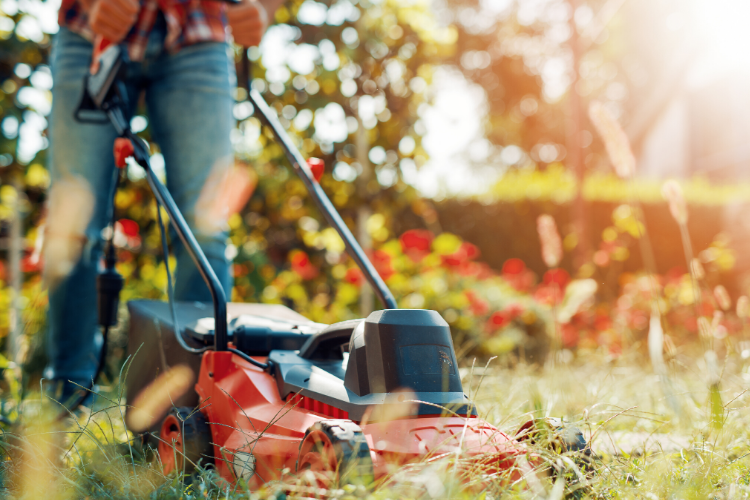 From the Ground Up - Summer lawn care (audio)