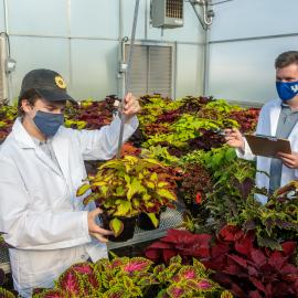 Ty Rich (l) and Paul Cockson collect data in a coleus cultivar trial that Rich is leading. Photo by Matt Barton