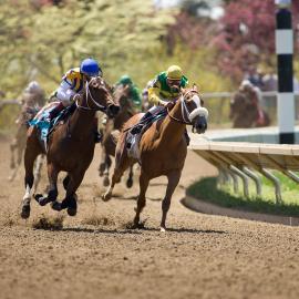 Racing during a spring meet at Keeneland. Photo by Matt Barton