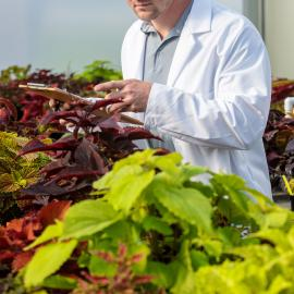 Doctoral graduate student Paul Cockson lends his support to a coleus cultivar trial at the University of Kentucky. Photo by Matt Barton