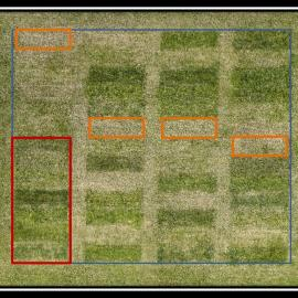 Drone shot taken in April, showing test plot with treated areas and untreated control areas. Controls are noted in orange. Photo by Jimmy Henning