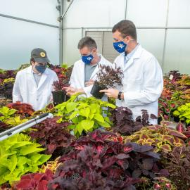 (l-r) Ty Rich, Paul Cockson and Garrett Owen compare notes for a coleus cultivar trial at the UK Horticultural Research Farm. Photo by Matt Barton