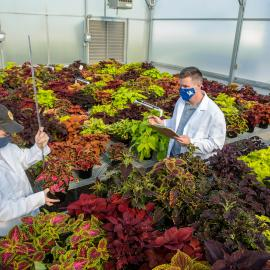 Project lead Ty Rich (left) and Paul Cockson record data in a coleus cultivar trial at the UK Horticultural Research Farm. Photo by Matt Barton
