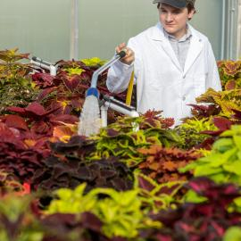 Undergraduate student Ty Rich collects data in a coleus cultivar trial he is leading at the University of Kentucky. Photo by Matt Barton