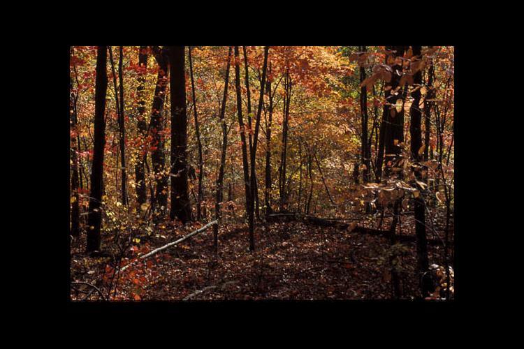 Kentucky woods in autumn
