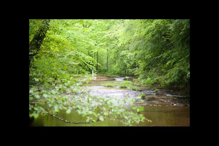 Woodlands and stream