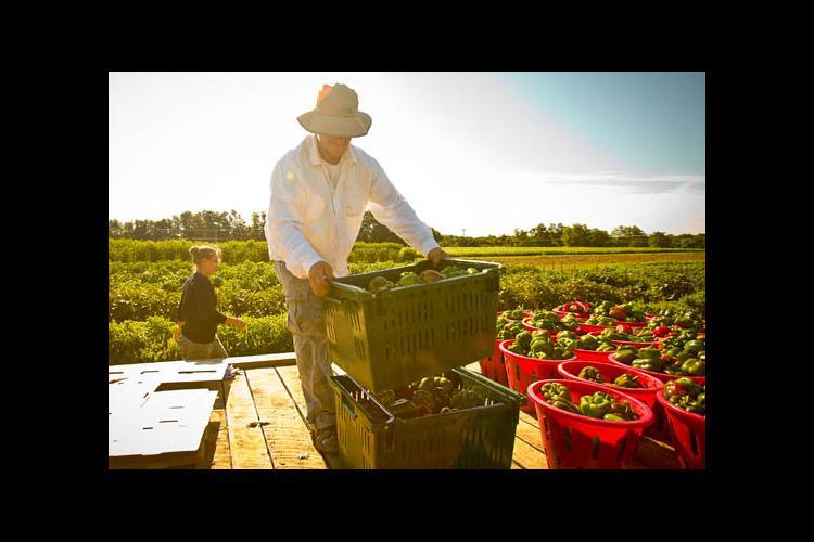 Harvesting for UKAg's CSA