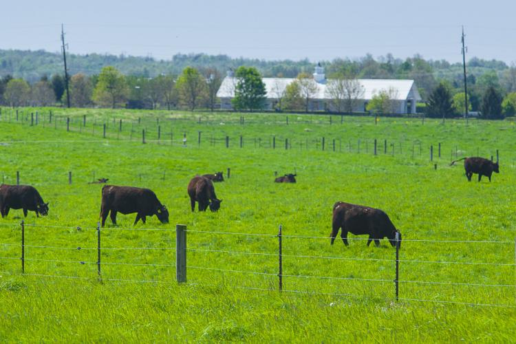 Sound fences are vital to any livestock operation.