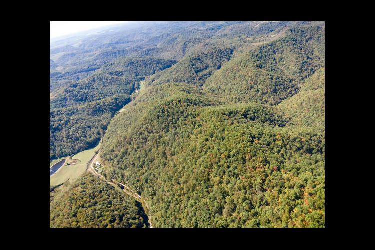 Eastern Kentucky forests offer economic hope to the region.