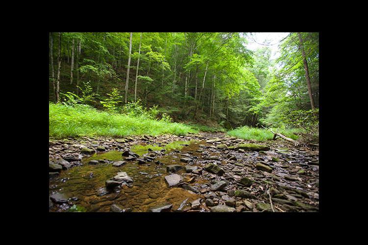 A stream runs through a Kentucky forest.