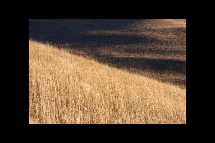 Tallgrass prairie in winter