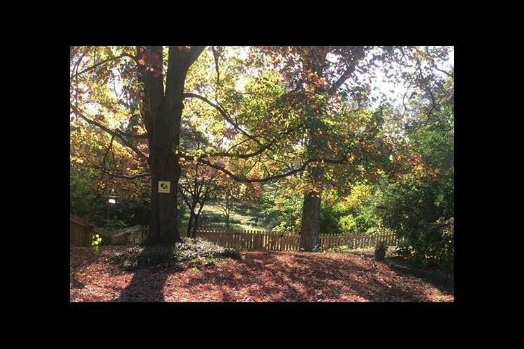 A Lexington backyard in the fall.